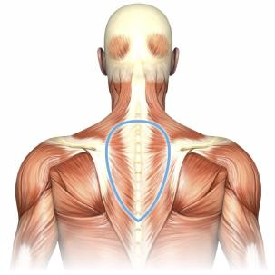 pain science CTO muscle back
